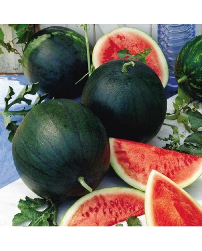 Watermelon Sugar Baby Seeds