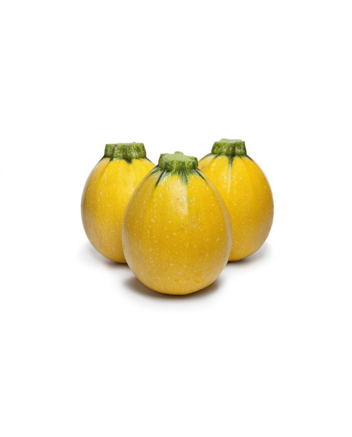 Squash Round Yellow Seeds